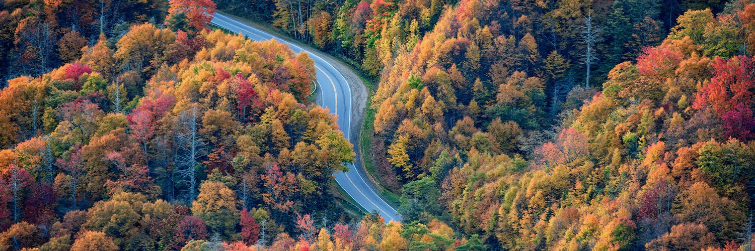 Winding road within colorful woods